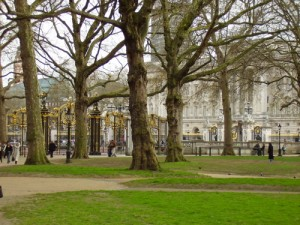 Buckingham Palace through the trees